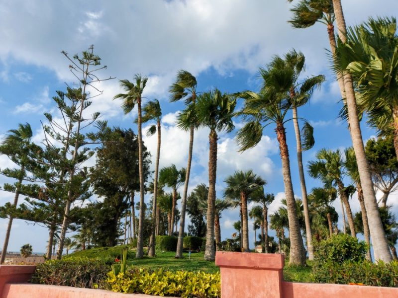 Palm trees and lush gardens at the Montazah Palace complex